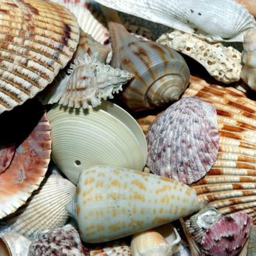 sea-shells-1886613_1920 - Copy